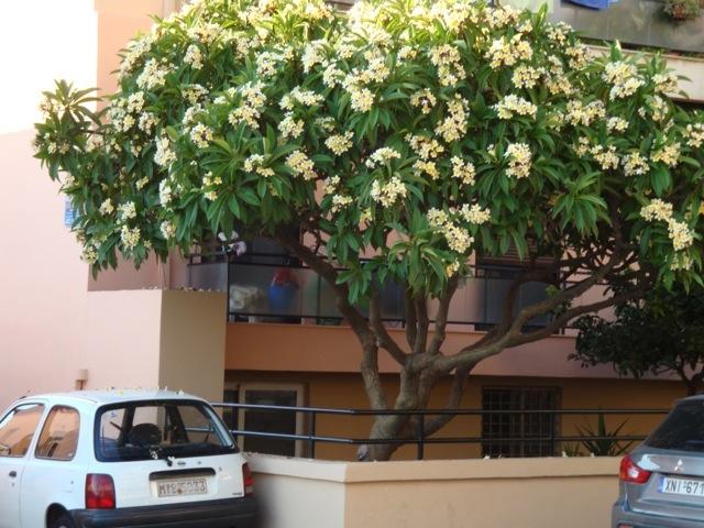 hvid og gul blomst