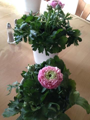 Planter og Blomster