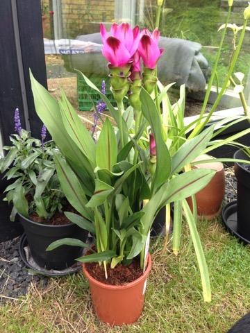 en blomst hved navn veronika