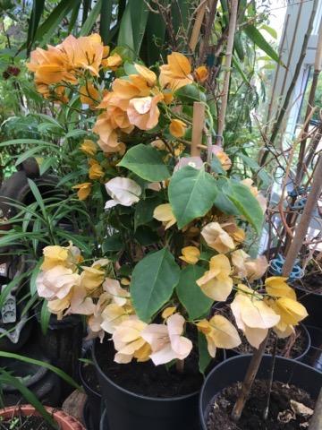 Bilka planter og blomster